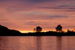 Killer mangrove sunset phot.