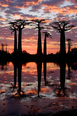 Sunset at the Avenue of the Baobabs.