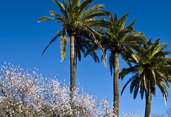 Things I love about winter: January at La Gomera, Canary Islands (l a b e t e) Tags: africa sunset sea sun beach sunrise spain espana afrika canaryislands spanien islascanarias 2014 lagomera photokmatrixde