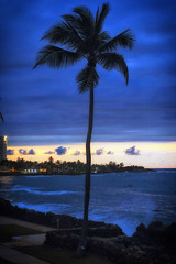 Blue Hour Palm (dorameulman) Tags: sunset silhouette puertorico outdoor sanjuan caribbean bluehour dorameulman