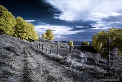 moon dust & gold (Antonio Ciampriello) Tags: ir infrared montagna hoya matese infrarosso 720nm samyang infraredphotos provinciadicaserta parcoregionaledelmatese samyang14mm samyang14mm28 nikond80infrared fotografiainfrarosso nikond80infraredconversion