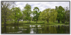 Downing Park (jsleighton) Tags: park geese spring pond gulls ducks newburgh downing