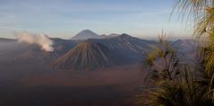 Sunrise @ Mount Bromo (Gunung Bromo), Java (Danil den Toom) Tags: mountain nature sunrise indonesia nationalpark mount np gunung bromo semeru tengger cemoro nationa lawang