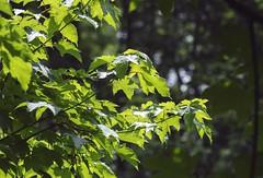 Parc De Biez - Mondeville (CyndiieDel) Tags: france nature normandie extrieur arbre parc calvados mondeville bassenormandie parcdebiez