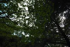 DP0Q2665lr (yoshitoshi ABe) Tags: sigma  dp0quattro 20160626