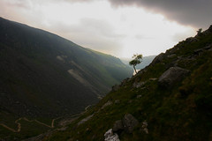 A tree on a hill (Costigano) Tags: ireland irish tree clouds canon eos hill glendalough hillside wicklow moutain