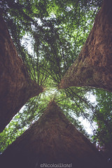 Nature (I) (Nicolas Wiatel) Tags: travel trees light sky abstract green nature up forest big high looking peaceful trunk