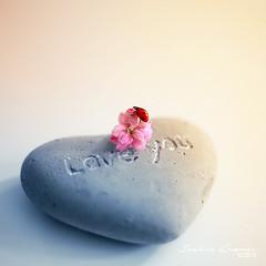 Love You (Joakimkr) Tags: life flowers macro love nature canon 50mm still ladybug 5d f18 markii joakim healzo krmer joakimk