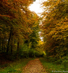 A walk in the woods (derena_d.) Tags: england photography woods unitedkingdom path walk hampshire footpath alton ackenderwoods