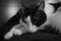 P7082876 (colette_noir) Tags: bw monochrome pen olympus kittie epl2 14mmlumix