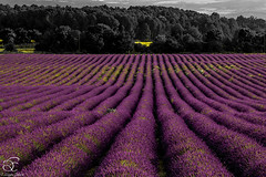 Missing Provence - 9 (BeNowMeHere) Tags: trip travel flowers summer france color colour nature landscape colorful village lavender colourful provence 500px ifttt benowmehere missingprovence