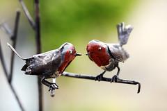 Daoulas_20160728_004 (bourjean29) Tags: france bretagne britanny finistere daoulas abbaye religieux expodaoulas jeanbourgeois bourgeoisjean canon5dmk2 rougegorge sculpture oiseaux