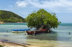 Anclados (Sniper PR) Tags: botes boats agua water playa beach mar ocean tree lajas puertorico clouds nubes cielo sky