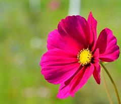 Bimbo des prs :-) (Thierry.Vaye) Tags: flower fleur d600 nikon tamron 90mm f28