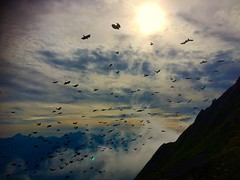 Backlight Birds. #rochersdenaye, #Vaud, #LakeGeneva, #topofthecliff, #switzerland_vacations, #switzerland, #mountines, #nature, #montreux, #mountainlift, #birds, #hitchcock, #scary, #sunset, #horror, #greatview, #dark, #darkness, #backlight (thomastattarletti) Tags: montreux lakegeneva alps switzerland sunset greatview darkness dark horror mountain nature backlight birds hitchcock rochersdenaye instagramapp square squareformat iphoneography