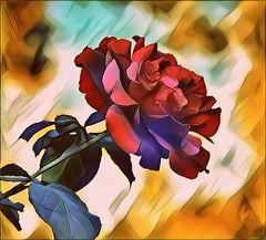 Digital Rose (AngelVibeDigital) Tags: roses rosebud nikon blossom art paintedflowers photography nikonp900 rose red digitalart digitalrose colorful