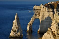 volando en el paraiso (ceszij) Tags: france francia normandie normandia etretat scogliere falesie acantilado gabbiano seagull oceanoatlantico atlanticocean rock