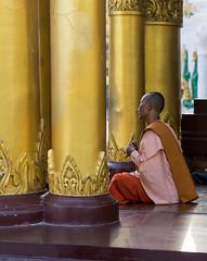 Uncharted Myanmar (mcmessner) Tags: gold light monk myanmar nun offerings pagoda shwedagonpagoda tcs unchartedmyanmar yangon