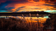 Simple Beauty (Traylor Photography) Tags: alaska autumn cattails sunrise pottermarsh morning marsh reflection anchorage fall clouds dramatic unitedstates us