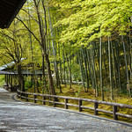 Using the Tenryu-ji temple's side entrance, you see the bamboo forest from another side. thumbnail