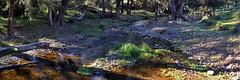 Palmers Oakey Creek (Merryjack) Tags: creek pano 31 3840x1280