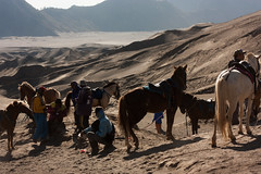 Sunny break on Bromo [Java, Indonesia] (Melvinia_) Tags: light horses horse nature animal canon indonesia landscape cheval 50mm volcano java nationalpark asia southeastasia lumire caldera asie paysage f71 jawa bromo semeru tengger chevaux batok caldeira naturel indonsie eastjava asiedusudest canoneos450d bromotenggersemeru javaoriental