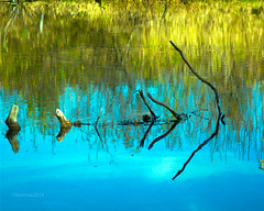 reflections (bonnie5378) Tags: reflections sticks pond oct2014 bishoptonquebec