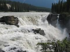 Jasper NP ~ Athabasca Falls (karma (Karen)) Tags: trees canada topf25 rocks pines waterfalls alberta 4summer athabascafalls canadianrockies jaspernp canadanationalparks icefieldspkwy