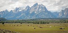 Horses at Moose Head Ranch (Christopher Lane
