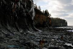 Coast Hike (naismithd) Tags: ocean dog nature nova bay seaside walk cliffs scotia fundy