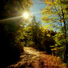 Autumn sun (Alpsee, Bayern) (armxesde) Tags: autumn trees sun fall yellow germany bayern deutschland bavaria golden pentax herbst flare sonne bäume ricoh sunflare k3 baviera alpsee sonnenstern