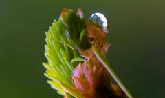 Im Wald 4 (Bruder Bartel) Tags: natur wald wassertropfen canoneos60d macro100mmisusm