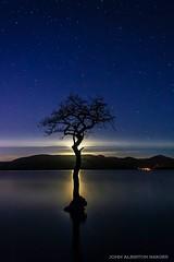 Lone Tree & Moonshine, Millarochy (john&mairi) Tags: sky tree night bay nocturnal lone loch lomond starry millarochy