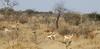 Botswana Hunting Safari 16