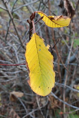 Still a little bit of autumn hanging around (rozoneill) Tags: ranch park beach oregon island coast state hiking trail lone boardman samuel brookings whaleshead wsweekly112