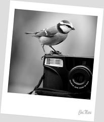 Un sourire SVP... ! (mars-chri) Tags: noiretblanc appareilphoto mésangebleue polaroide butrysuroise valdoisebutrysuroise