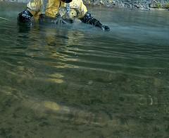 IM001180 (hymerwaders) Tags: wet yellow mud gelb muddy schlamm matsch nass chestwaders watstiefel watsteifel