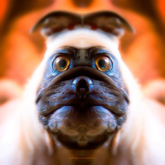 g r e n d e l l a (epiclectic) Tags: reflection animal photoshop mirror design graphic wildlife humor perspective manipulation images symmetry reflect symmetrical mutant twisted enhancement epiclecticcom epiflection epiflectionbyepiclecticcom
