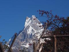 Machhapuchre-Mardi Himal Trek-Nepal (mikemellinger) Tags: nepal snow mountains nature beauty trekking trek landscape scenery hiking hike hills adventure sacred peaks himalaya himalayas fishtail mardihimal machhapuchre