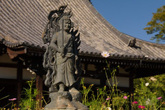 / Hannya-ji Temple (kimtetsu) Tags: flower japan temple   nara  cosmos