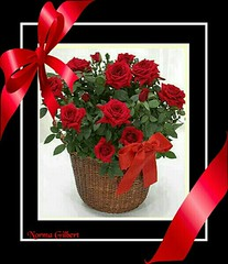 """A Gift Of Roses"" (kimclatam) Tags: redrule reds strawberryfields allphotos redblackwhite blackandwhiteandred thebeautyofnature flickrhearts flickrroseawards sweetmermaidsandbigsharks yourperspective redisvibrantandpassionate cancercanbebeat friendsplayground dagmarsexclusiveflowersparadise dagmarlunasonjaandfriends ahugisworthathousandwords redphotosonly selectionfantasticbeautyofflowers brilliantcapturesinternational dailyphotosinternational koolpicsmoderated photographyisfunletshaveaparty"