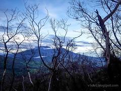 Ijen Crater pohon terbakar2-055039rw (Luciana Adriyanto) Tags: travel indonesia landscape eastjava ijencrater kawahijen banyuwangi bondowoso v1olet lucianaadriyanto