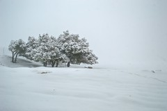 Alone and cold (Yazan_) Tags: trees winter snow cold me alone creepy jordan isolated