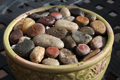 Stones & Living Stones (Sarah B in SD) Tags: green garden succulent sandiego lithops socal succulents droughttolerant lithop livingstones succulove