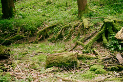 Waldboden (shortscale) Tags: holz wald baum moos wurzel boden