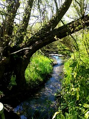 What a beautifull place ! (Eaglle Northy) Tags: tree green nature water river meadow pasture bucolic