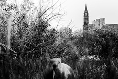 encounters. (jonathancastellino) Tags: leica trees ontario tree green animal eating critter ottawa eat distance parliamenthill peacetower thicket
