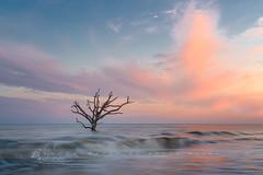 Boneyard (betty wiley) Tags: sunset tree beach coast waves southcarolina charleston boneyard snag edisto bettywileyphotography