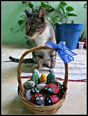 El Gato de Pascuas (MaPeV) Tags: cats canon painting chats chat stones tabby kitty gatos powershot gato kawaii neko katze morris gatti pintura piedras felin gattoni gattini g16 tabbyspoted bellolindoguapetn