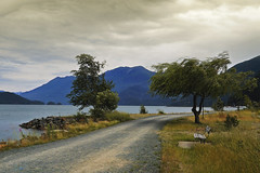 Into the Wind (charhedman) Tags: road trees sky mountains water bench wind harrisonlake harrisonhotsprings happybenchmonday